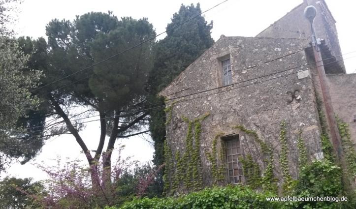 Ruine altes Haus Efeu