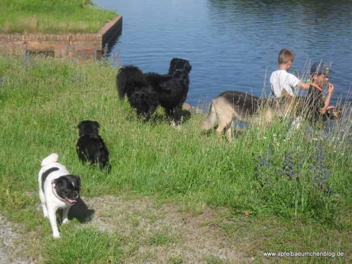 Hunde, Kinder, Wasser